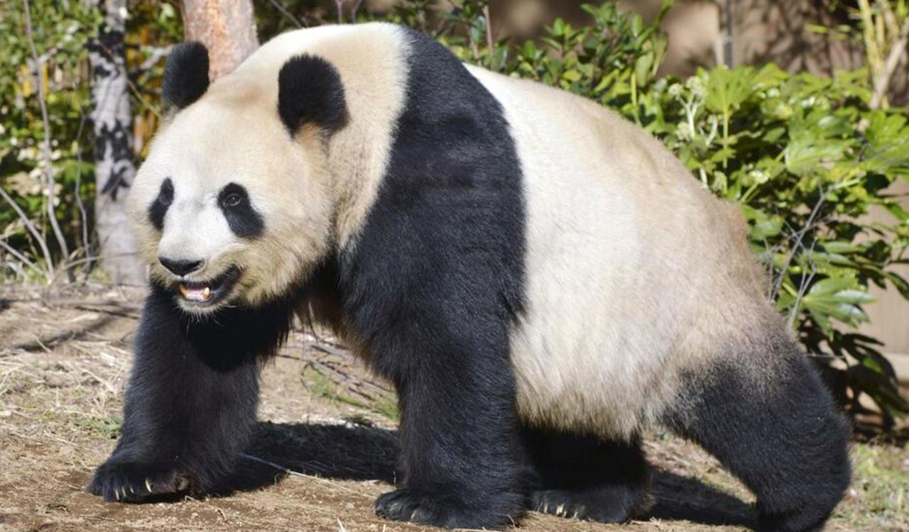 2021上野のパンダの赤ちゃんの誕生はいつ